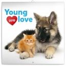 Young Love – koťata & štěňata