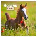 Koně – Christiane Slawik